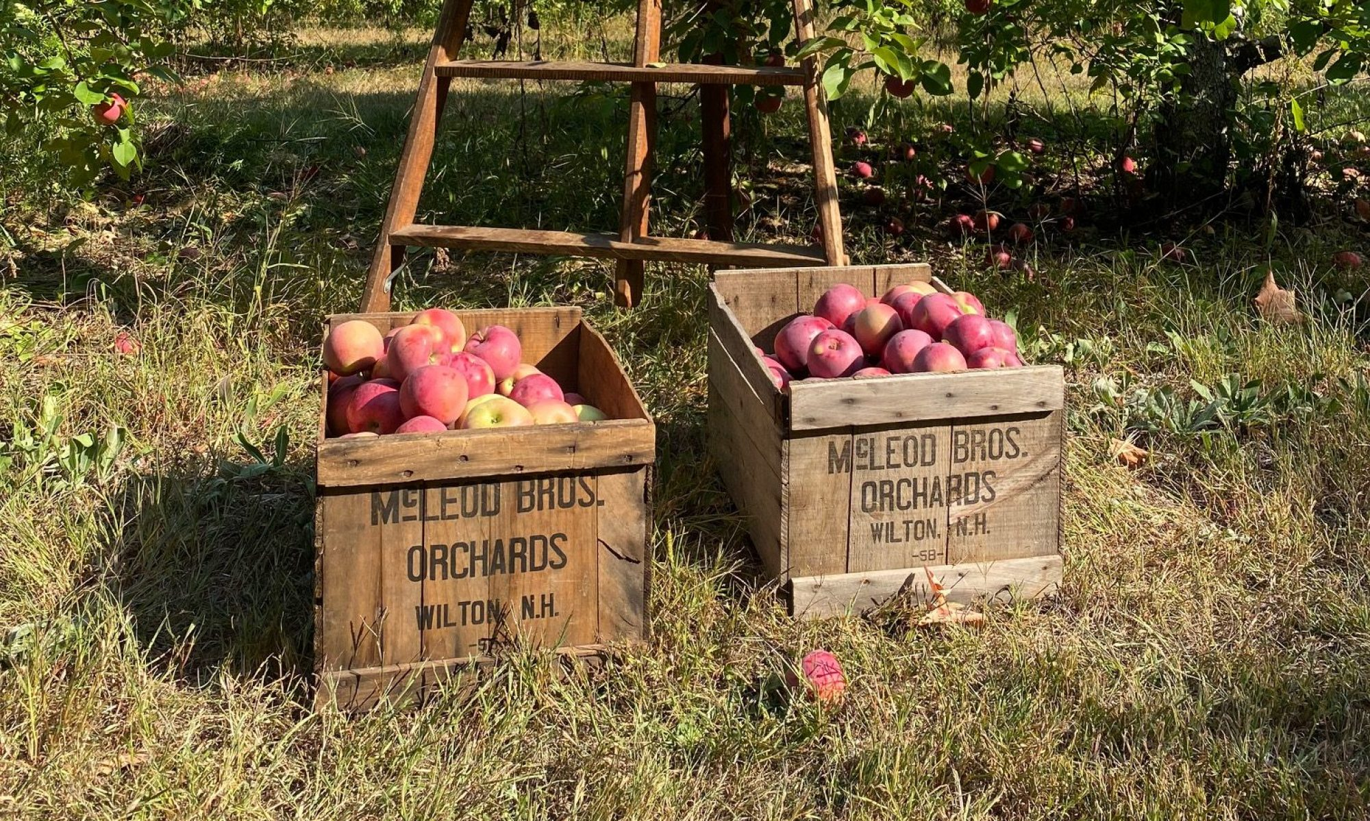 McLeod Orchards